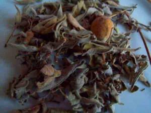 ada-çayı-bitkisi
