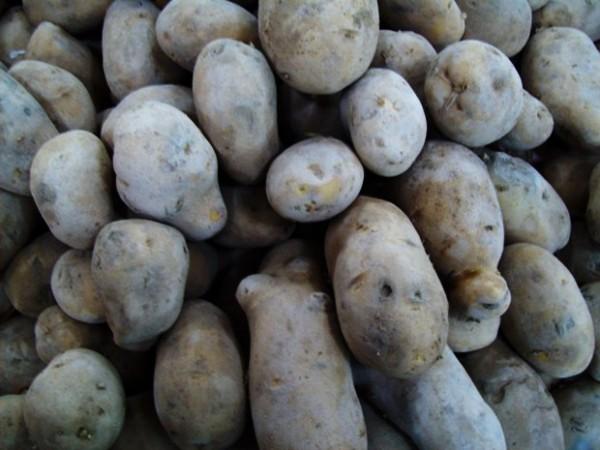 patates-diyeti