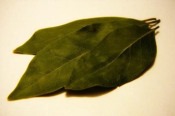 defne-yaprağı-yağı-faydaları