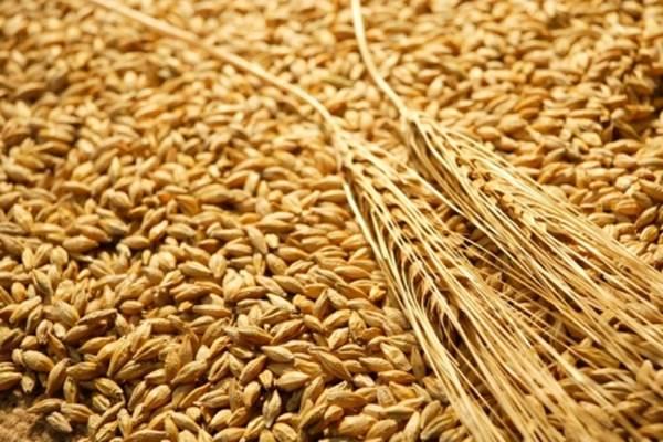 buğdayın-faydaları