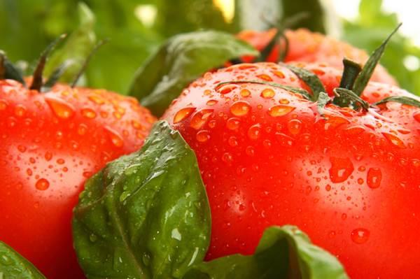 domates-kaç-kalori