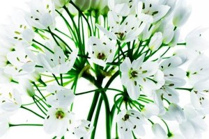 mutfaklardan-eksik-edilmemesi-gereken-şifalı-bitkiler