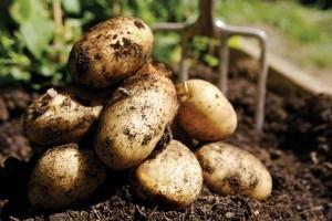 Patates Neye İyi Gelir