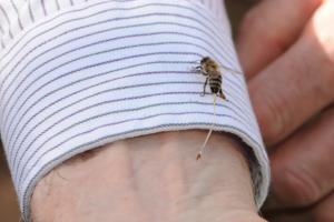 Arı Sokmasının Bitkisel Tedavisi