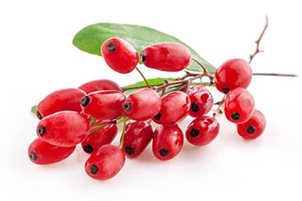 Goji Berry Neye İyi Gelir